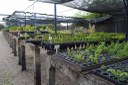 Herbário do Centro de Referência Para Recuperação de Áreas Degradadas da Caatinga (CRAD/UNIVASF)