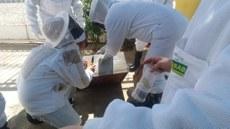 Equipe atua no resgate de abelhas.