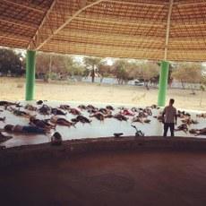 Prática de ioga do Projeto Medita Vale no Parque Municipal Josepha Coelho
